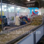 Băng tải rửa trái cây xuất khẩu